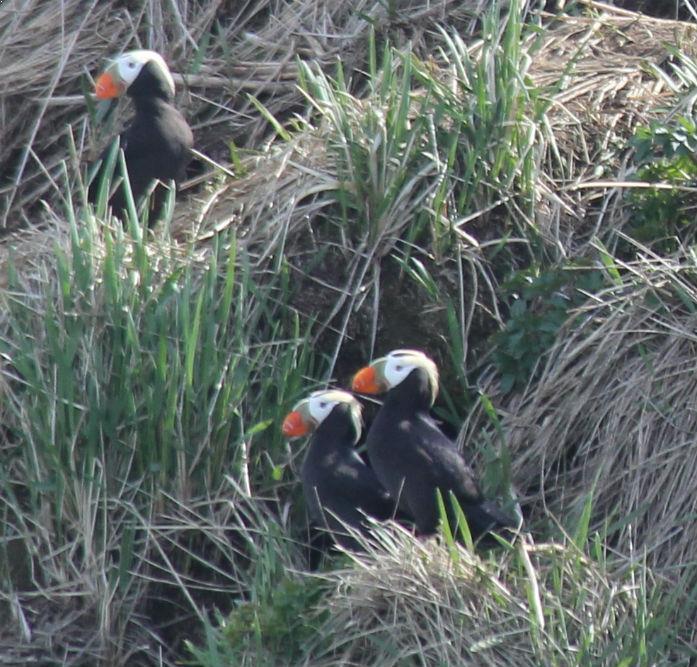 Alaska - Rockjumper Birding Tours - Worldwide Bird Tours