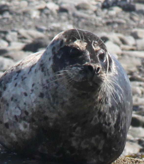 Alaska Bird watching Tours : Tours.com