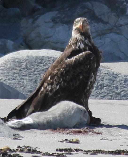 Alaska Birding, Birdwatching Tours | Alaska Tours