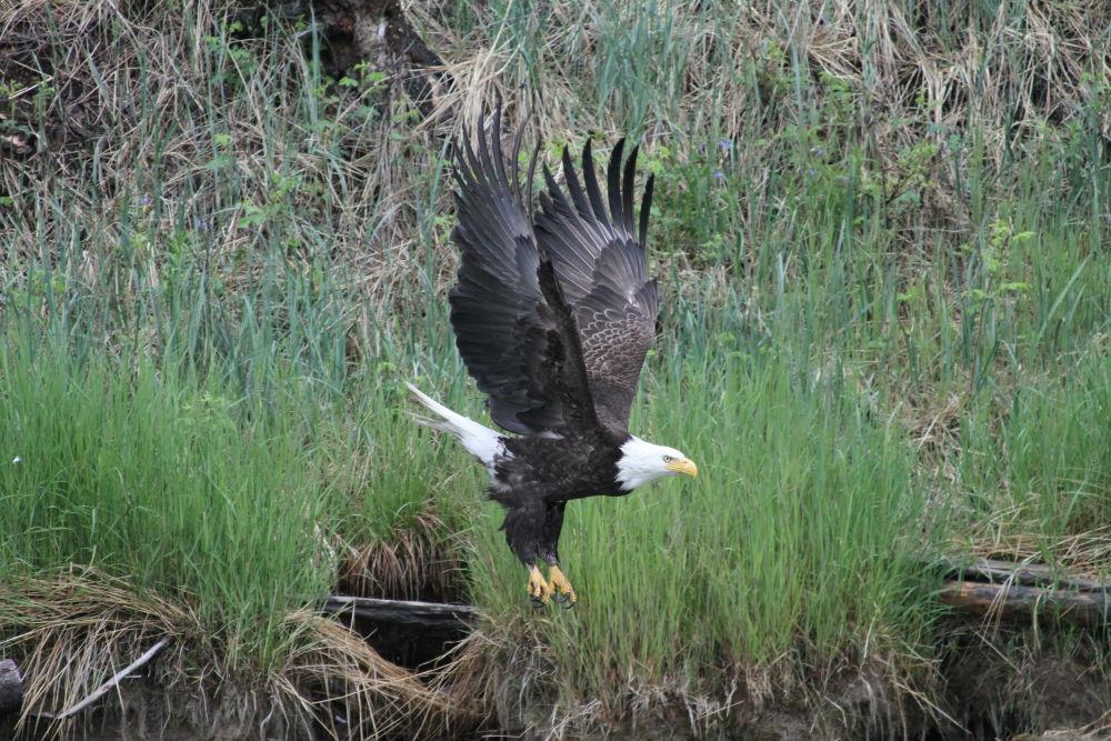 Alaska Birding | Accessible Locations To View Birds and ...